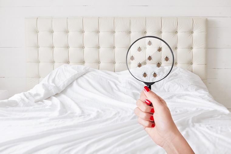 Bekämpfung von Bettwanzen